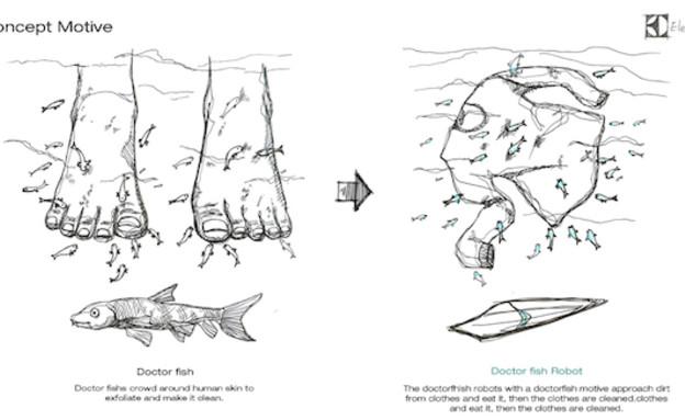 כביסת דגים (צילום: Chan Yeop Jeong )