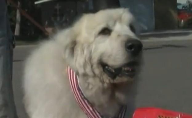 כלב ראש עיר (צילום: יוטיוב)