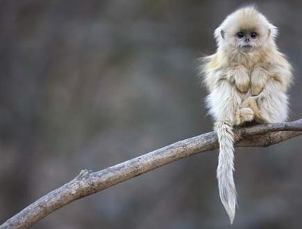 חיות בסכנת הכחדה (צילום: distractify.com)