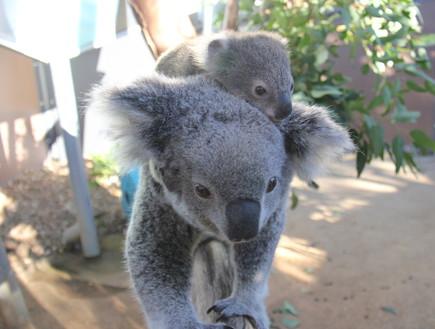 המלצות סובבות עולם (צילום: Taronga Zoo)