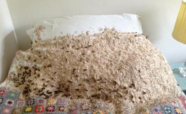 צרעות במיטה (צילום: M & Y News Agency)