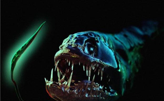 דגים מפחידים (צילום: oddee.com)