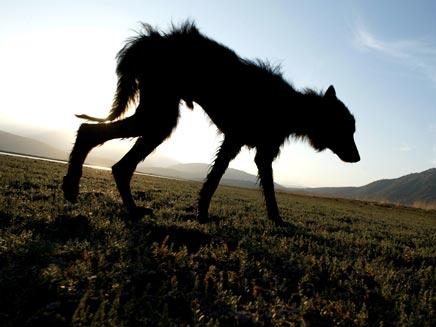 כלבים בלב המחלוקת (אילוסטרציה) (צילום: רויטרס)