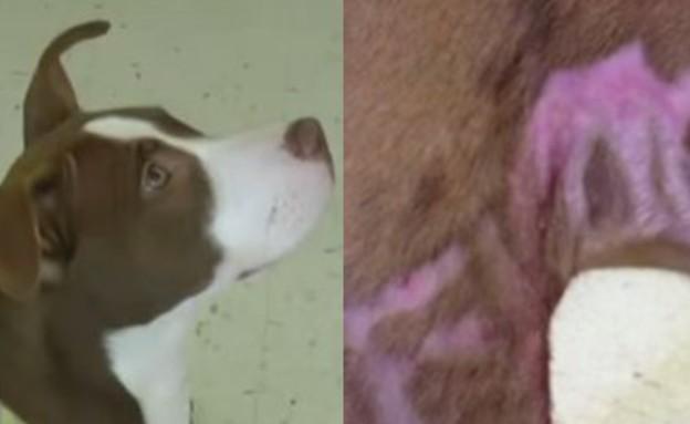 ניתוח פלסטי לכלבה (צילום: יוטיוב)