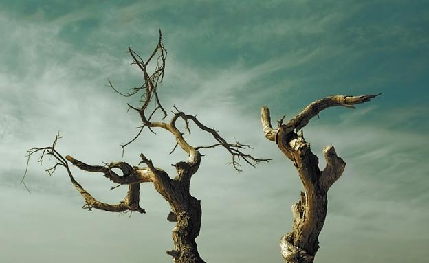"""צילומים מתחרות """"מצלמים 6:6"""" (צילום: גבריאל ריף,  מתוך אתר פיקיוויקי)"""