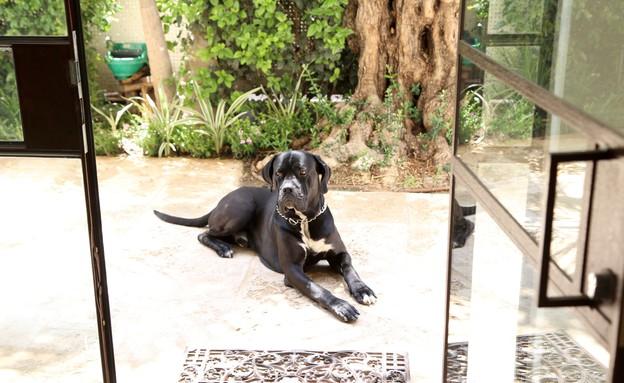 ליאת אלנבוגן, כלב (צילום: ליאור דנציג)