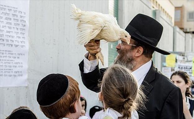 תרנגול כפרות (צילום: חדשות 2)