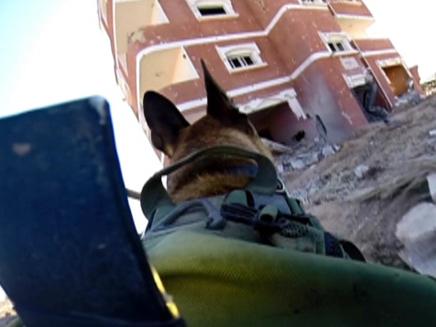 הכלבים סרקו מבנים ואיתרו מטענים