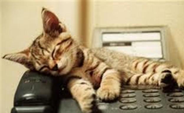 חתול וטלפון (צילום: cats.org.uk)
