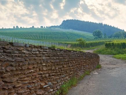 עובר כל גבול גרמניה - BischöflicheWeingüterTrier (צילום: יובל ג'וב הרגיל)