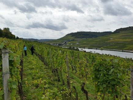 עובר כל גבול גרמניה - כרמים על המוזל (צילום: יובל ג'וב הרגיל)