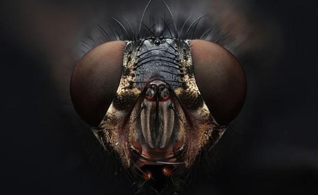 קלוז אפ חרקים (צילום: Macroscopic Solutions)