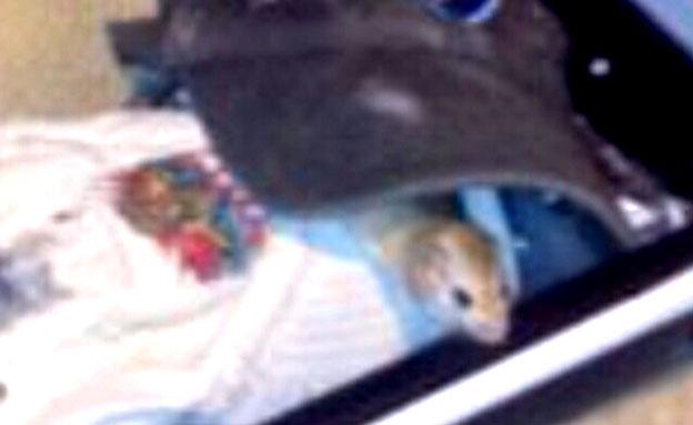 צפו: רגעי האימה בבסיס שטוף העכברים