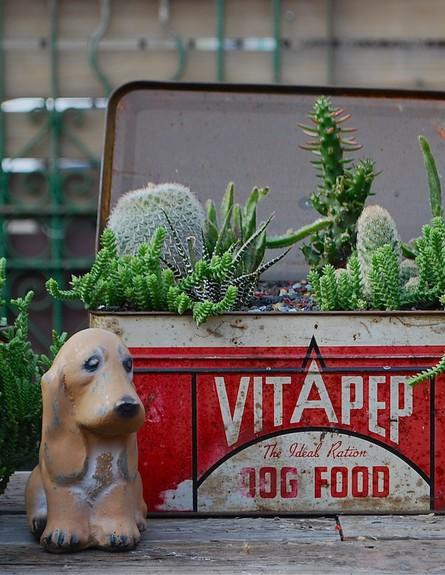כלי_וינטג'_אדום_ומבחר_סוקולנטים_צילום_potted_store (צילום: potted_store)
