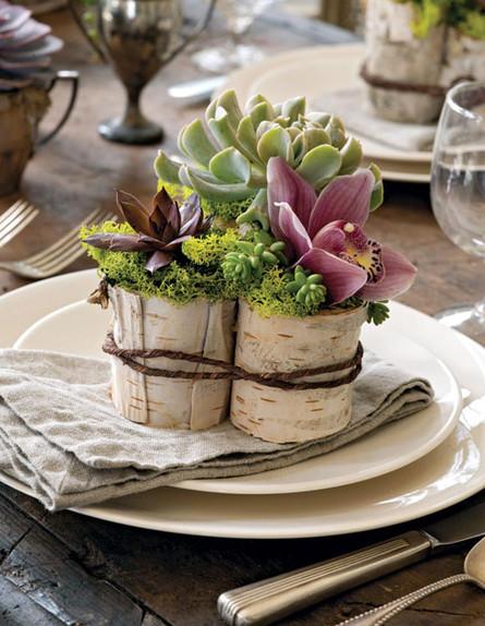 סידור_פרחים_לשולחן_האוכל_של_סוקולנטים_וסחלב_צילום_ (צילום: KATHRYN_BARNARD)