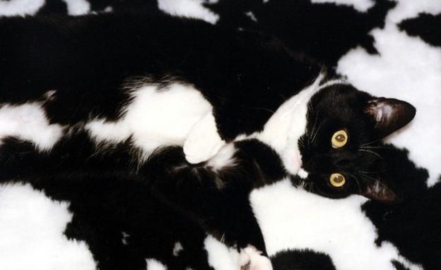 חיות בהסוואה (צילום:  boredpanda.com)