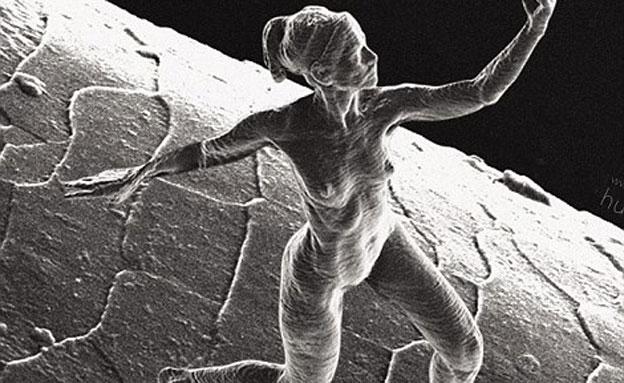 יצירות לנמלים חובבות אומנות אנושית (צילום: dailymail)