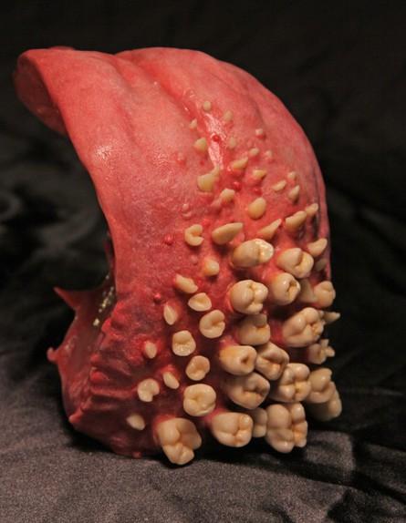 פסלי איברים (צילום: ג'ונתן פאיין)