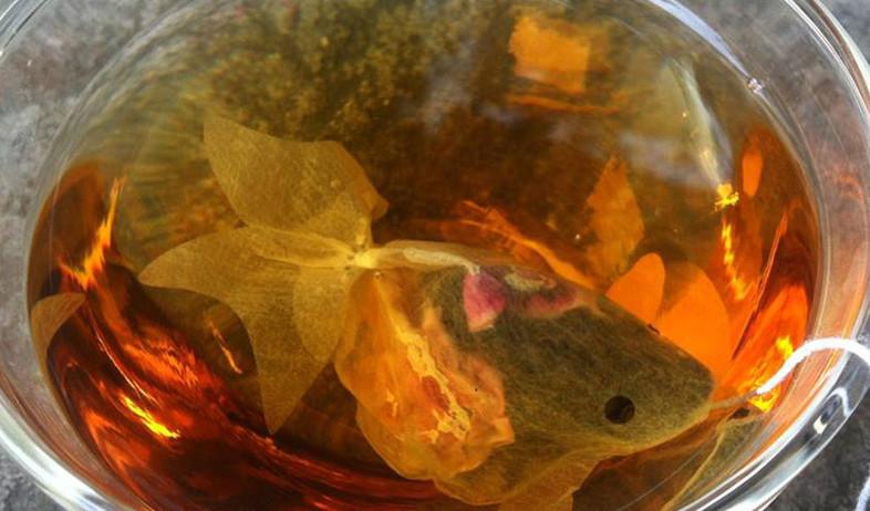 תיון דג זהב (צילום: charmvilla )