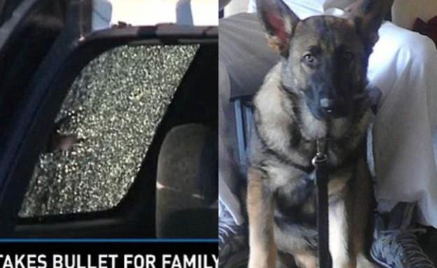 כלב הציל משפחה (צילום: WXIA)