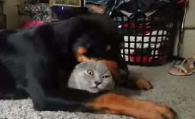 כשכלב אוהב חתולה (צילום: יוטיוב)
