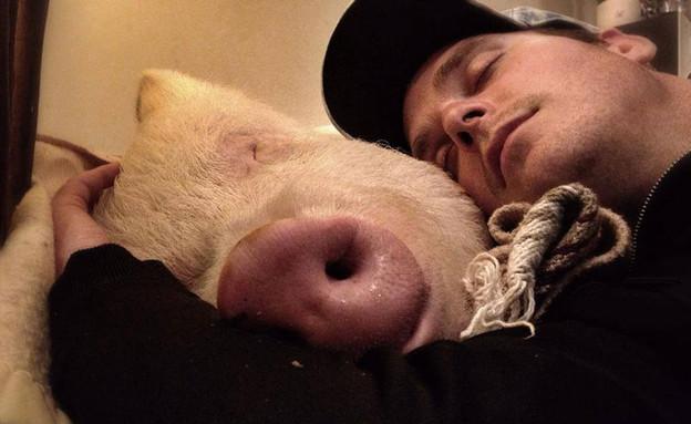 חזיר מחמד (צילום:  Photo by Flash90)