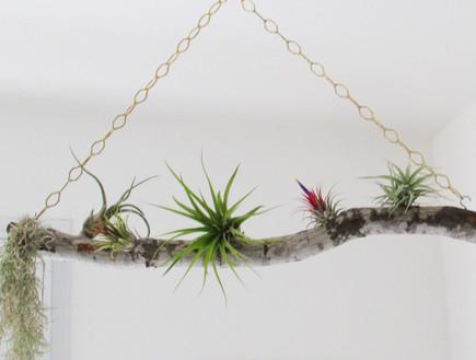 נועה סטרלינג, נדנדת ענף עם צמחי אור אצלה בבלוג