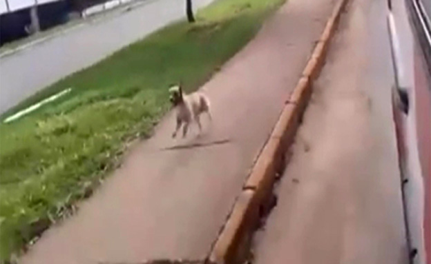 כלב (צילום: חדשות 2)