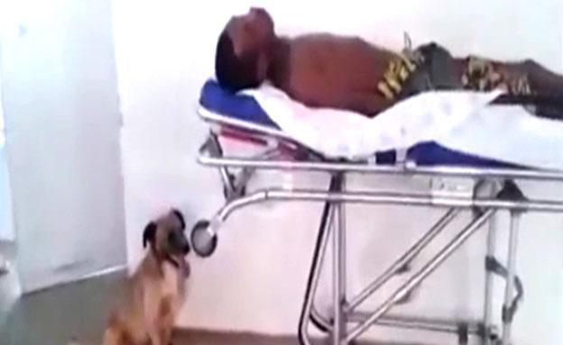 צפו במרדף הנחוש של הכלב אחר האמבולנס שפינה את בעלי