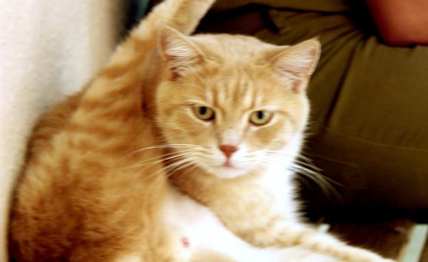 """חתול סקייהוק (צילום: אלדד אלמוזנינו, פז""""ם)"""