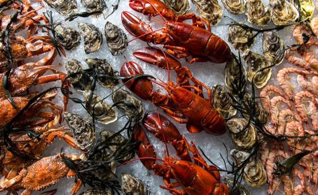 ערב דגים ופירות ים על הקרח ברפאל (צילום: ירון ברנר,  יחסי ציבור )