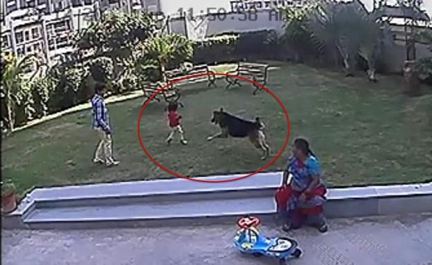 הציל את אחותו (צילום: יוטיוב)