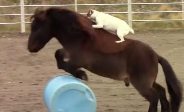 כלב וסוס (צילום: יוטיוב)