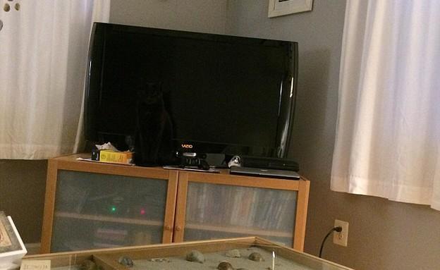 חתול בתמונה (צילום: reddit.com)