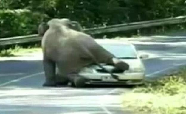 פיל רומס מכונית (צילום: יוטיוב)