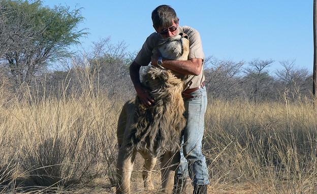 איש ואריה חברים (צילום: Barcroft Media)