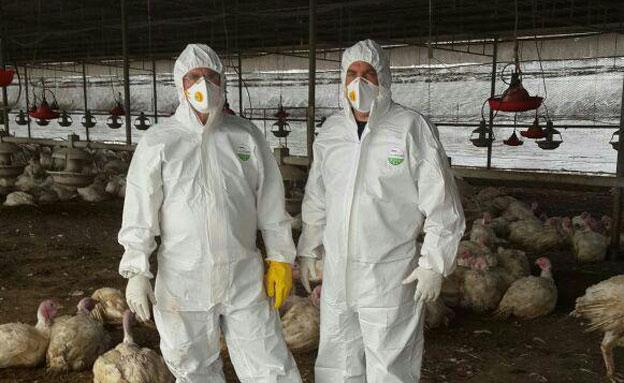 אנשי משרד החקלאות בלול הנגוע (צילום: צילום: דוברות משרד החקלאות)