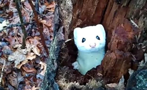 סמור בעץ (צילום: יוטיוב)