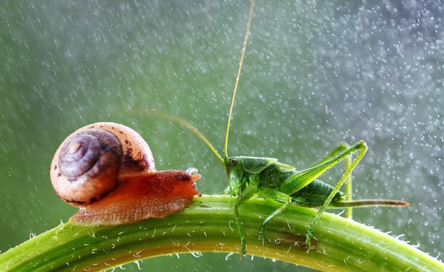 חרקים קלוז אפ (צילום:  ואדים טרונוב)