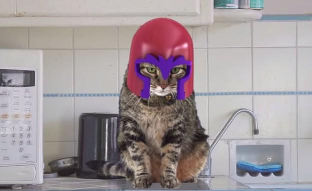 חתול מגניטו
