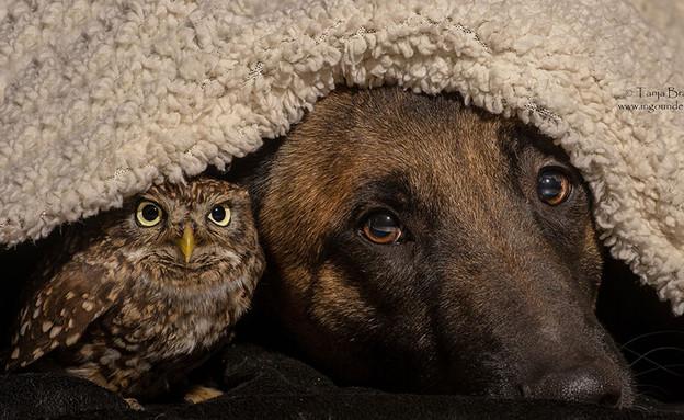 כלב וינשוף (צילום: טניה ברנדט)