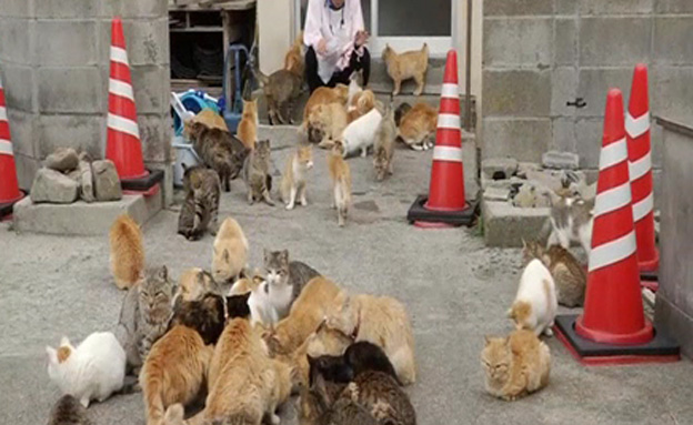חתולים, עיר החתולים, יפן (צילום: חדשות 2)