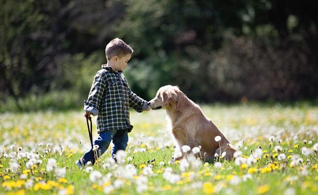 כלב עיוור (צילום: סטייסי מוריסון)