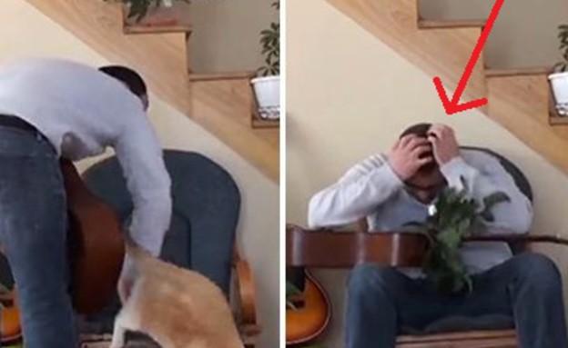 נקמת החתול (צילום: יוטיוב)