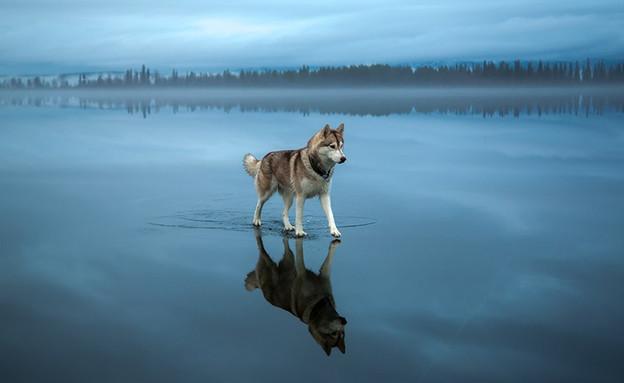 כלב על המים (צילום: פוקס גרום)