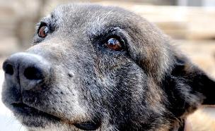 הכלב קרלו (צילום: דוברות חטיבת המשטרה)