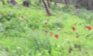 יער אודם (צילום: חדשות 2)