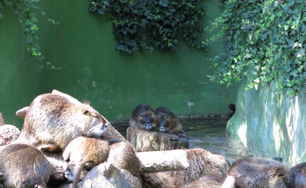 גן החיות בזגרב  (צילום: לירון מילשטיין)