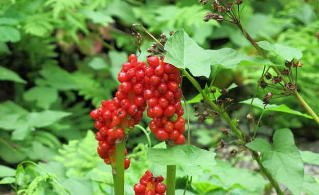 הגן הבוטני זגרב (צילום: botanic.hr)