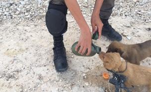 """צפו בחילוץ הגורים (צילום: דוברות מג""""ב)"""